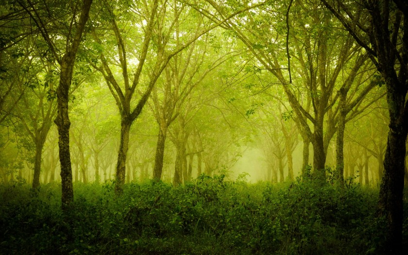 foggy-thick-forest
